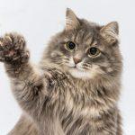 Estadounidenses amputan las garras a los gatos