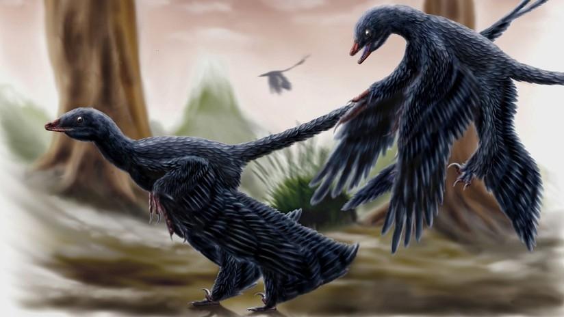 El fósil de este dinosaurio conserva su contenido estomacal. un lagarto