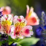 Qué significa el nombre de las 15 flores más bellas del mundo