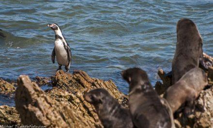América del Sur: Conoce sobre la fría corriente de Humboldt