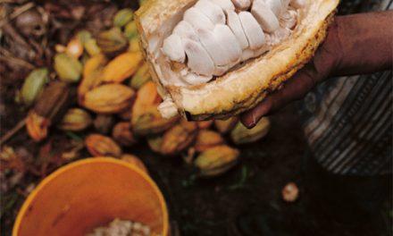 El mejor cacao blanco orgánico del mundo se consigue en Piura, Perú