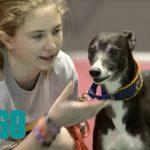 El Michael Jordan de los perros salta más alto que CR7 (Video)