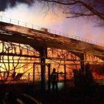 Decenas de animales mueren en Alemania víctimas de fuegos artificiales