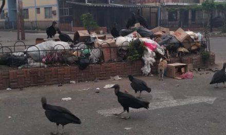 Acumulación de basura azota a habitantes del Táchira