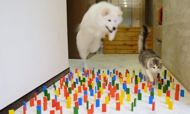 Mira la diferencia entre perros y gatos en tres minutos (Video)