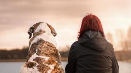El aislamiento afecta el bienestar de los humanos como el de las mascotas
