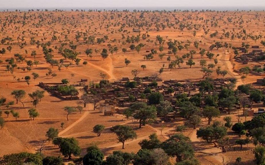Hallazgo: El desierto del Sahara ocultaba millones de árboles en su interior