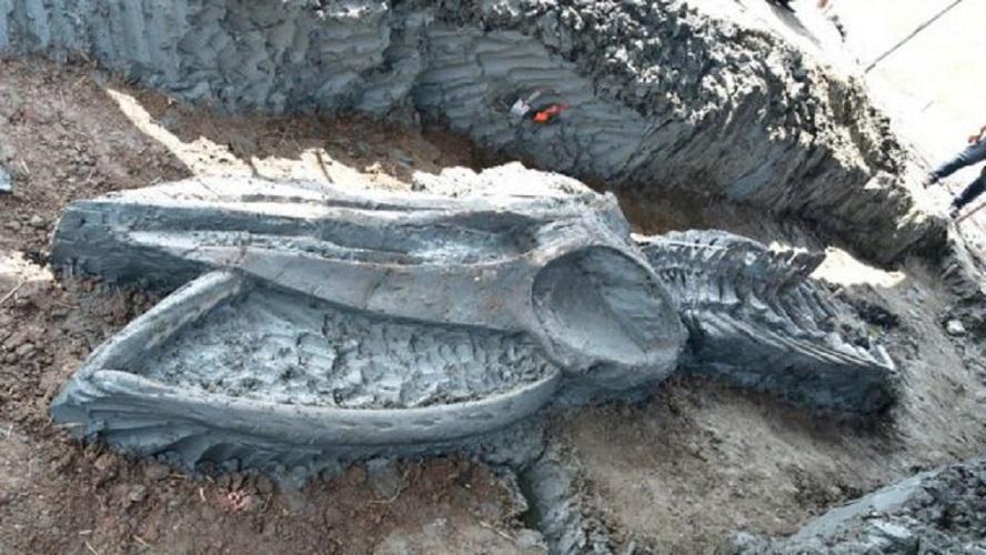 Paleontólogos hallan fósil de un cetáceo casi intacto cerca de Bangkok