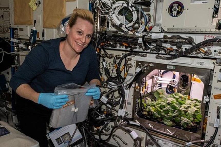 Plant Habitat-02: Astronauta cultiva los primeros rábanos en la ISS