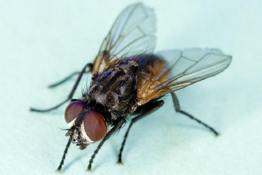 Conoce por qué es tan difícil atrapar una mosca, este es el secreto