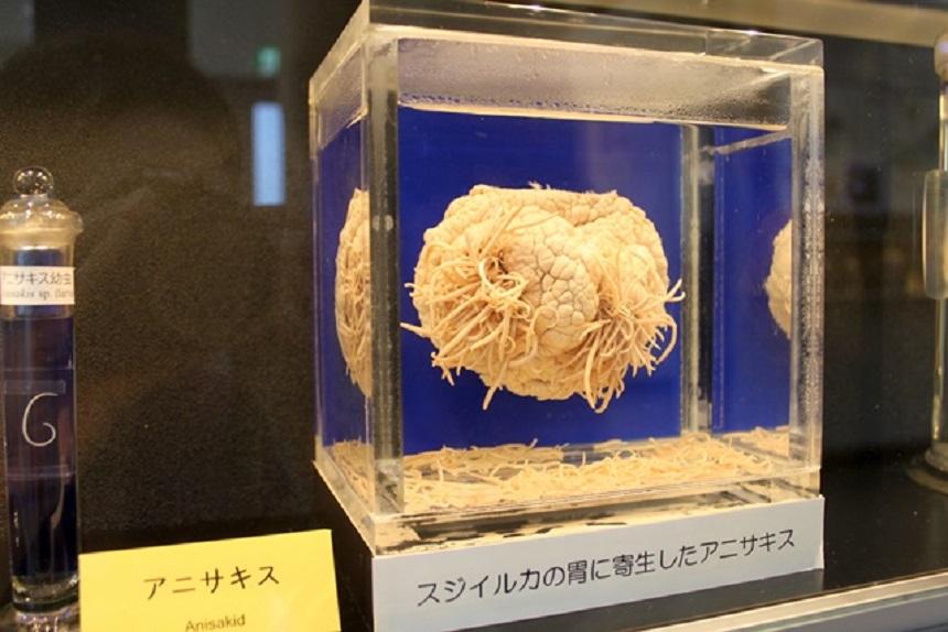 Conoce el museo en Japón dedicado a los parásitos