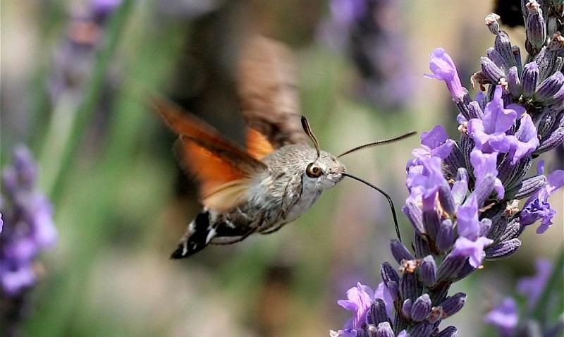 Por qué están desapareciendo los insectos y cómo podemos salvarlos