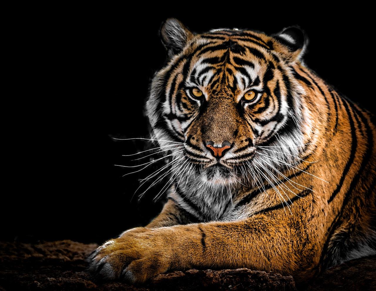 3 de marzo día vida silvestre naturaleza