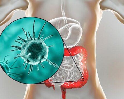 ¿Qué es y para que sirve el trasplante de microbiota fecal?