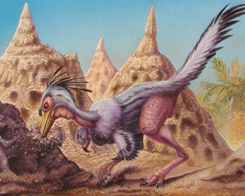 Shuvuuia, el dinosaurio con audición y visión nocturna extraordinaria