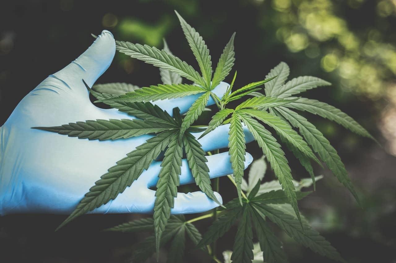 Daños de la marihuana en el cerebro