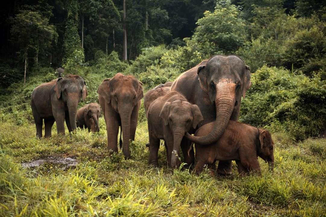 Manada de elefantes viajeros recorren China en un sorpresivo éxodo