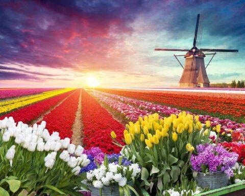 La burbuja del tulipán: primera gran crisis financiera