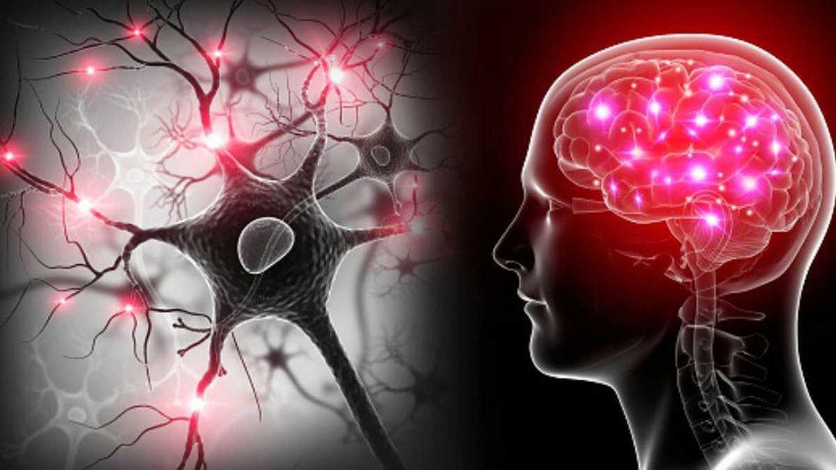 22 de julio: Día Mundial del Cerebro