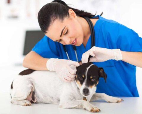 Hoy es el Día Nacional del Médico Veterinario