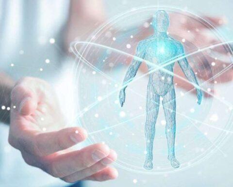 Glicocálix endotelial: conoce qué es, cómo funciona y su importancia