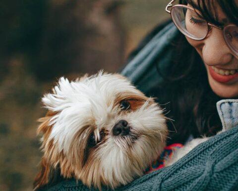 No al maltrato animal respeta a las mascotas Isnardo Bravo por 2 minutos